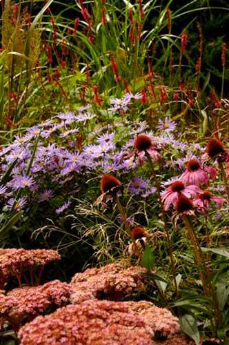 campo di fiori nursery