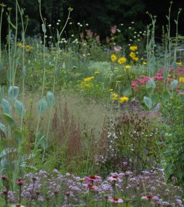 Perennial Meadow Summer-06