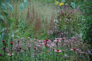 Perennial Meadow Summer-07