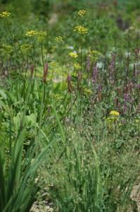 Perennial-Meadow-Spring-03