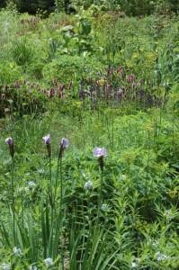 Perennial-Meadow-Spring-04