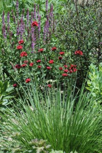 Perennial-Meadow-Spring-07