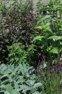 Perennial-Meadow-Spring-10