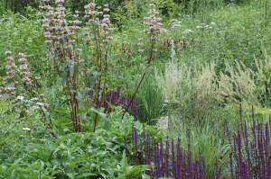 Perennial-Meadow-Spring-12