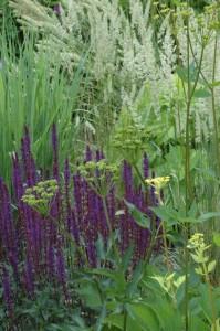 Perennial-Meadow-Spring-14