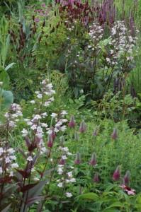 Perennial-Meadow-Spring-17