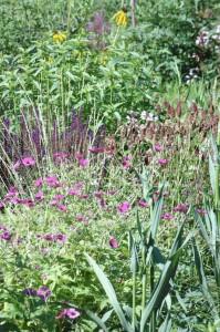 Perennial-Meadow-Spring-20